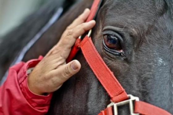 Ubriaco alla guida di un cavallo: sospesa la patente di un 45enne
