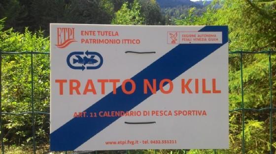 Tallio nei pesci: istituita zona 'no kill' tra Cave del Predil e Coccau