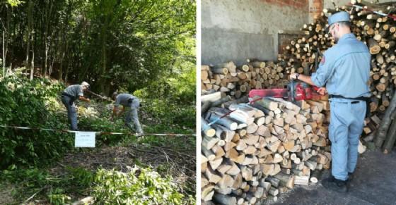 Taglia un bosco per rivendere 150 quintali di legna: nei guai un 64enne