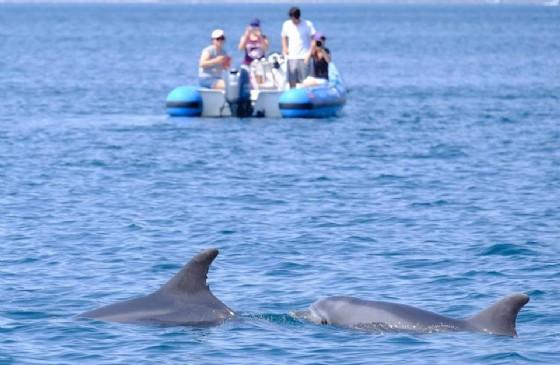 Ancora delfini avvistati nella Riserva di Miramare