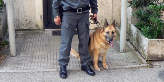 Sequestrata droga per oltre mezzo milione di euro: 36 persone arrestate