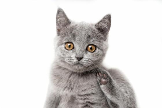 Tularemia, malattia rara trasmessa dagli animali