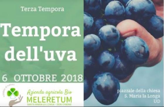 A Santa Maria La Longa si celebra l'uva con l'evento 'Quattro Tempora'