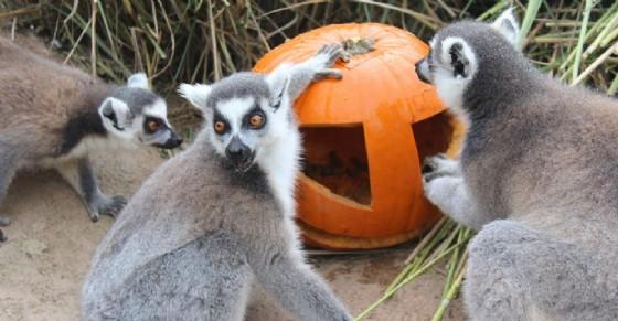 Halloween al bioparco