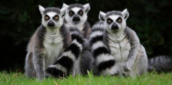 Al Parco Zoo Punta Verde tra Keeper talk e incontri speciali con i lemuri