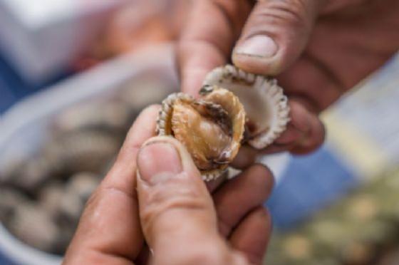 Arpa Fvg: «Sarà effettuato il campionamento di acqua e molluschi a Lignano»