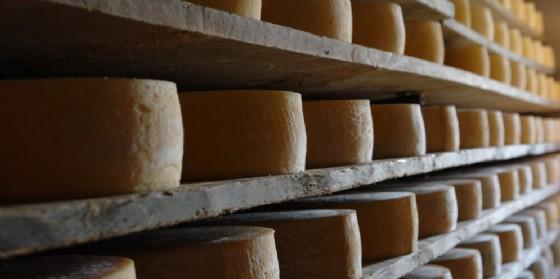 Crisi della filiera del latte: drastico calo delle forme di Montasio