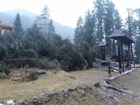 Maltempo: alberi cadono sul cimitero degli Eroi a Valbruna