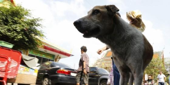 Ragazzo aggredito da un branco di sei cani - Immagine di repertorio