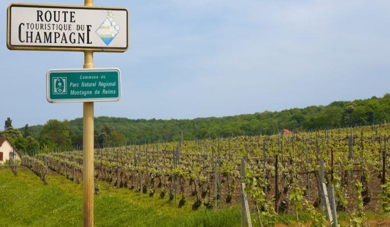 Vigne sulle colline di Reims