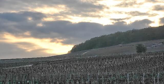 Vigne al tramonto sulle appellations Corton e Corton Charlemagne, in Cote de Beaune