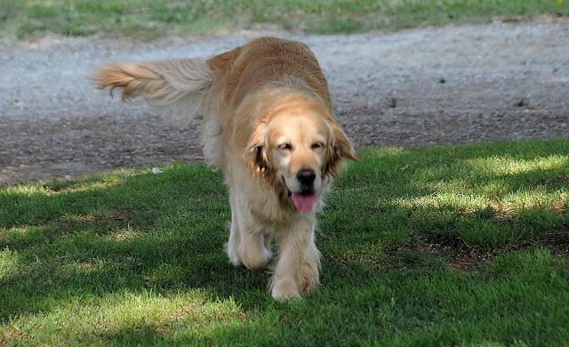 E infine Candy, cane mascotte delle Tenuta