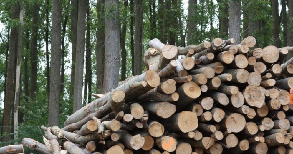 A rischio la produzione di energia da biomasse solide