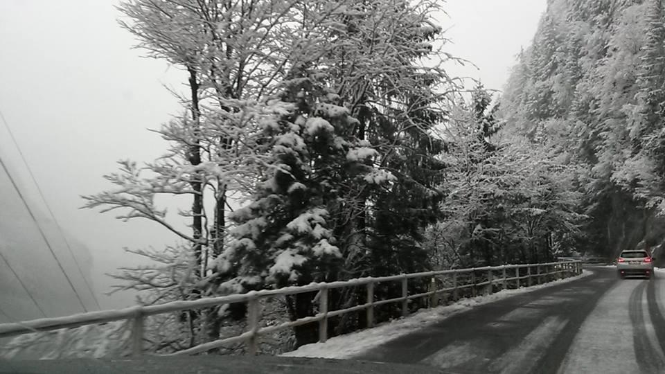 La strada per Sella Nevea (foto Rizzi)
