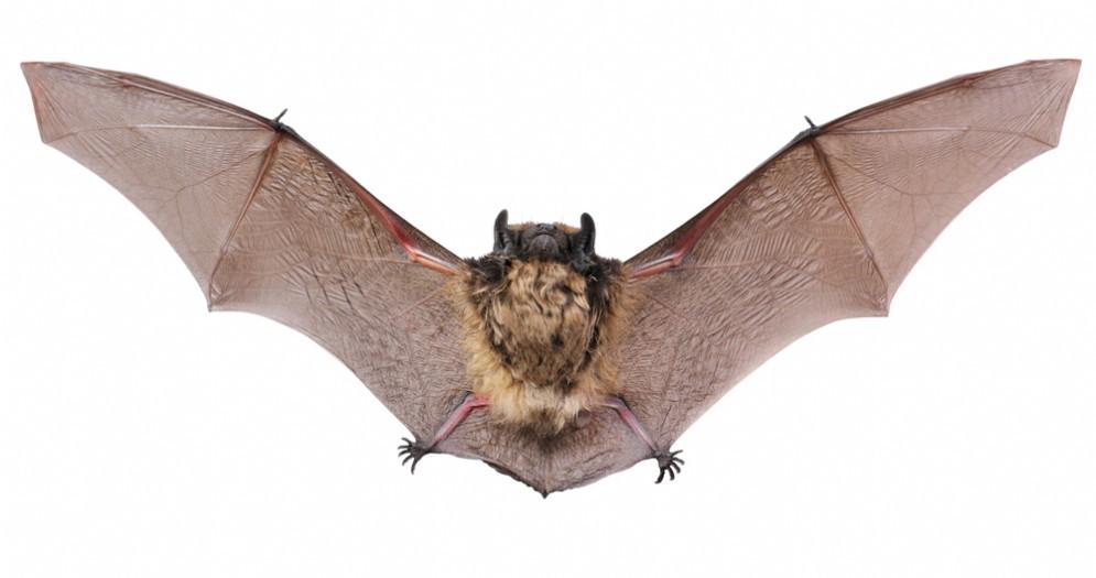 Virus da animale a uomo: una nuova minaccia da WIV1-CoV