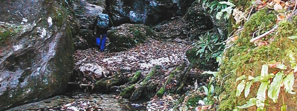 Il percorso immerso nel Parco delle Dolomiti