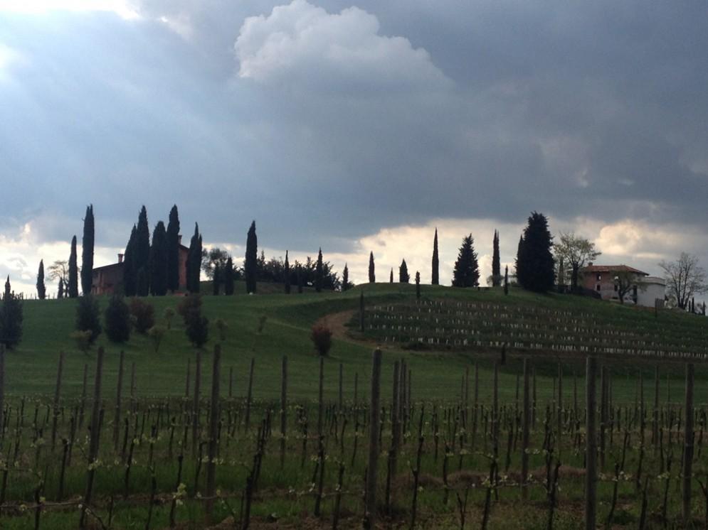 Le vigne attono al Castello