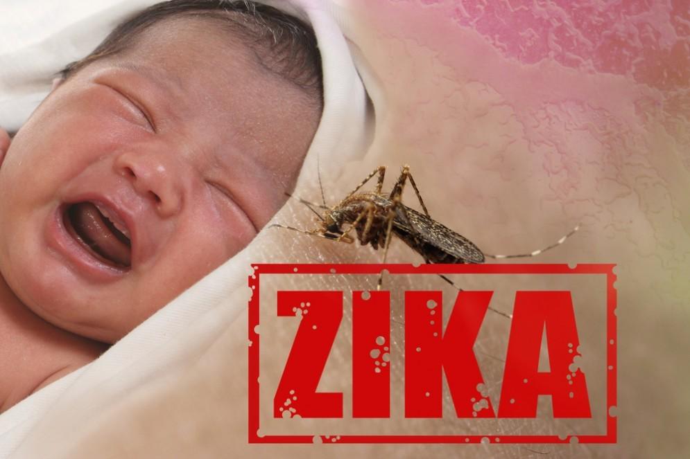Zika virus, è confermato: causa microcefalia