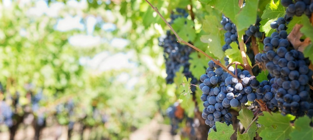 Edizione 2016 del Gran Premio Noè dedicata ai migliori vitigni di Fvg, Istria Croata e Slovena
