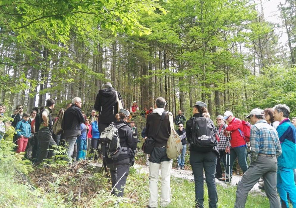 Le persone arrivate in Val Saisera alla scoperta del legno di risonanza