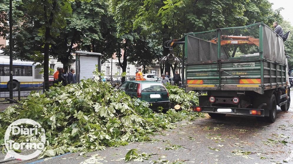 L'albero caduto in corso Re Umberto qualche settimana fa