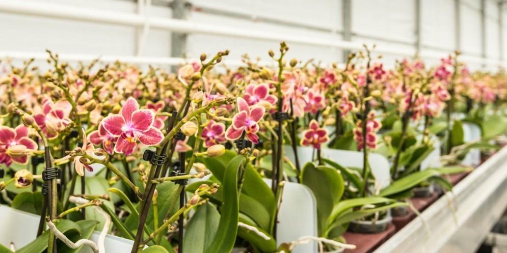 Tecnologia friulana utilizzata per la crescita delle orchidee in Olanda