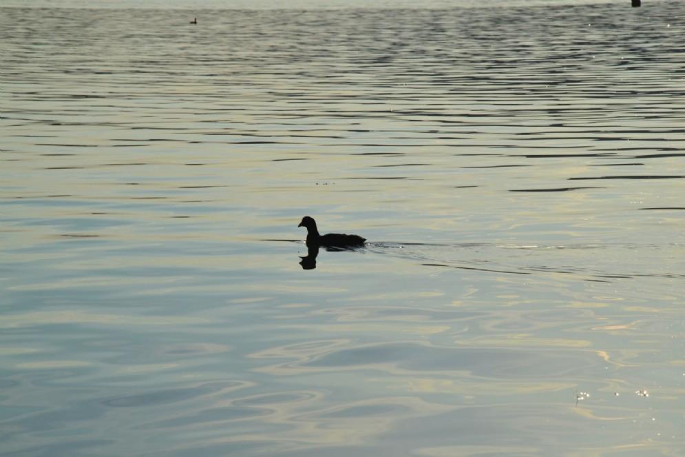 Non ci sono solo pesci, nel lago di Viverone...