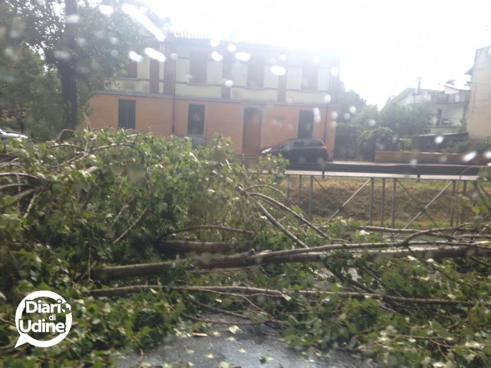 Uno degli alberi caduti a Udine (© Diario di Udine)