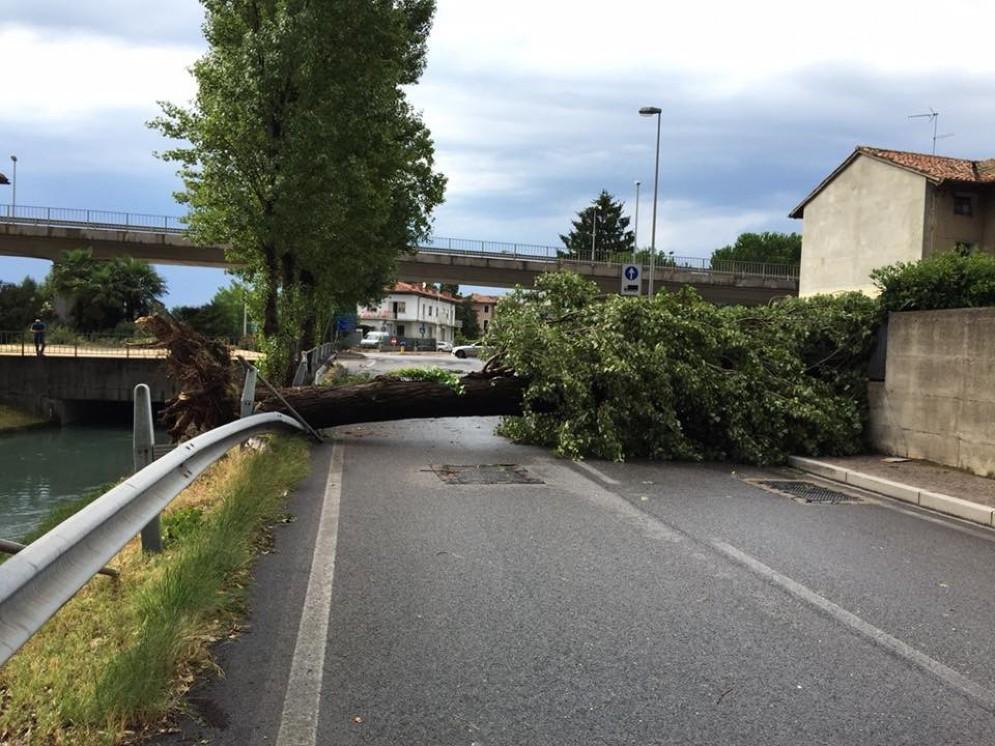 Uno degli alberi caduti tra via Martignacco e via Passons
