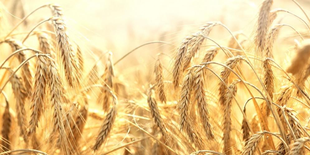 Protesta dei produttori di cereali in Fvg