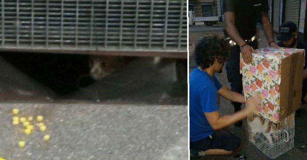 Residenti e polizia municipale si attivano per salvare il gatto