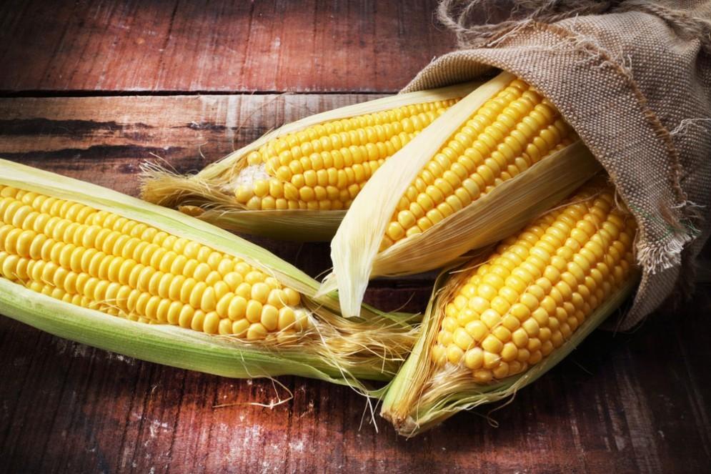 Ossa, per la loro salute pare sia utile la fibra solubile di mais