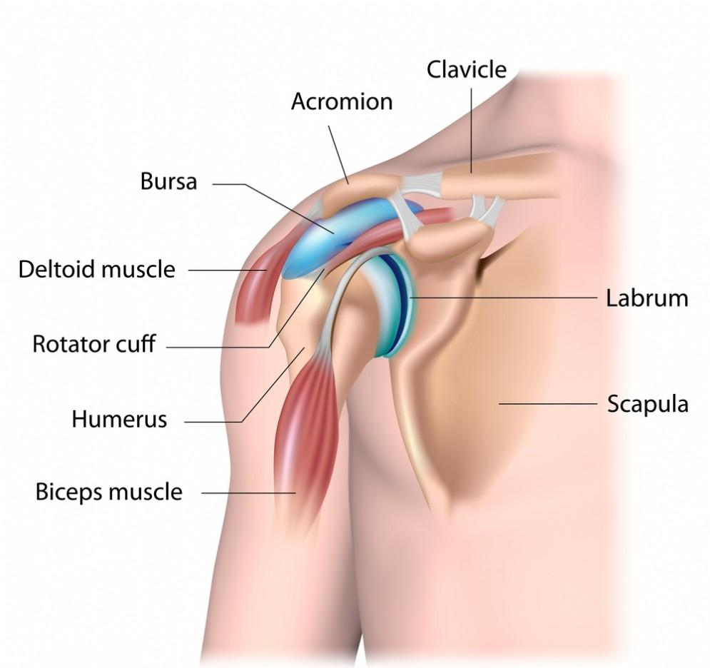 I muscoli coinvolti nella cuffia dei rotatori