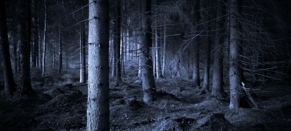 Trovato il presunto corpo di mario Grusovin nella pineta di Ostia