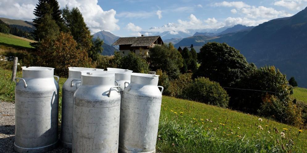 Ci sono problemi per la raccolta latte in Carnia
