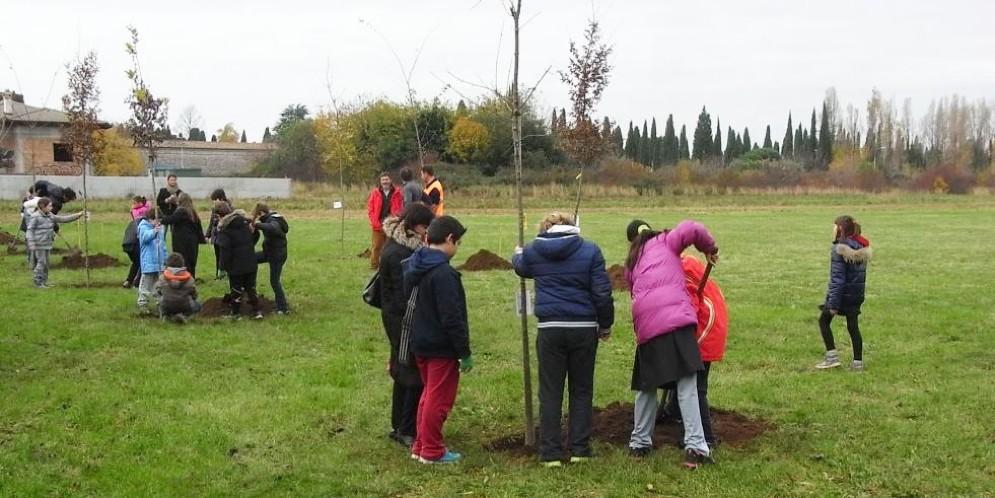 Una festa degli alberi a Udine