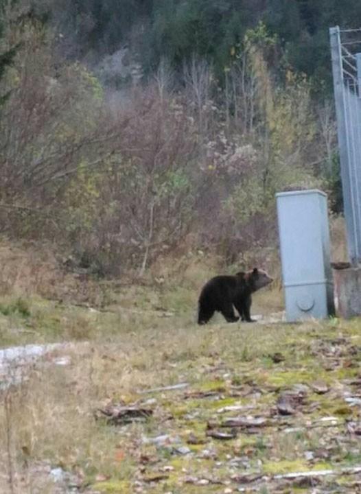 L'orso a Bagni di Lusnizza