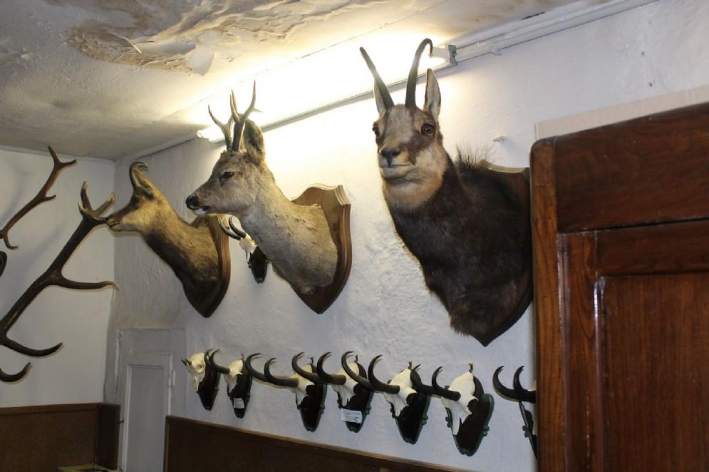 Alcuni dei numerosi animali abbattuti, ora imbalsamanti