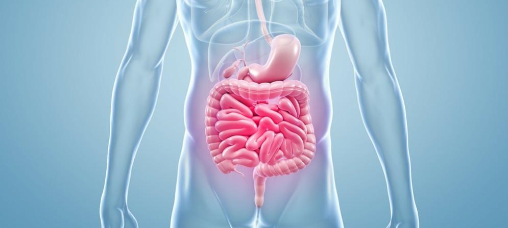 Incontro sulle malattie croniche dell'intestino