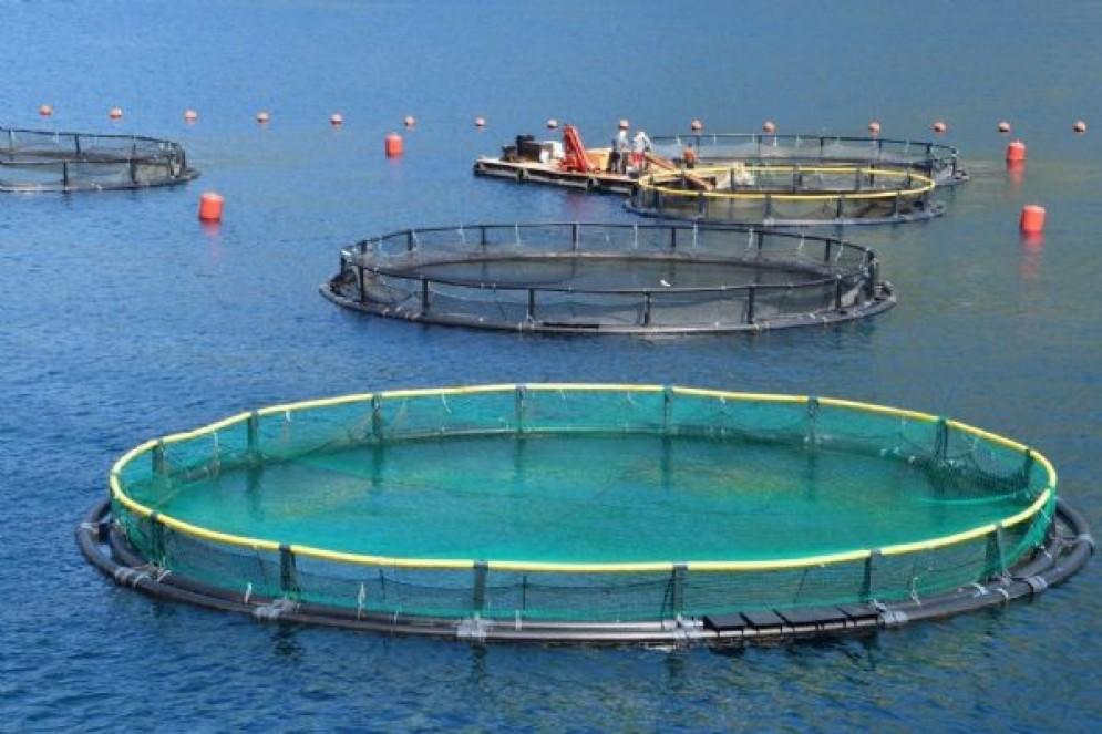 La sinergia che la Regione ha attivato nel settore ittico con le cooperative e le associazioni del comparto è significativa e strategica, rappresenta un'esperienza pilota in Italia