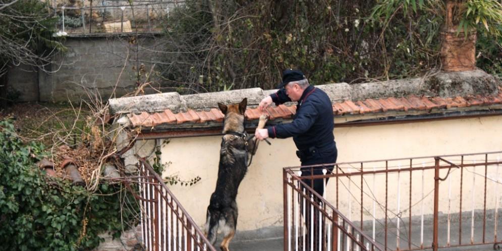 Carabiniere e cane antidroga dentro il centro