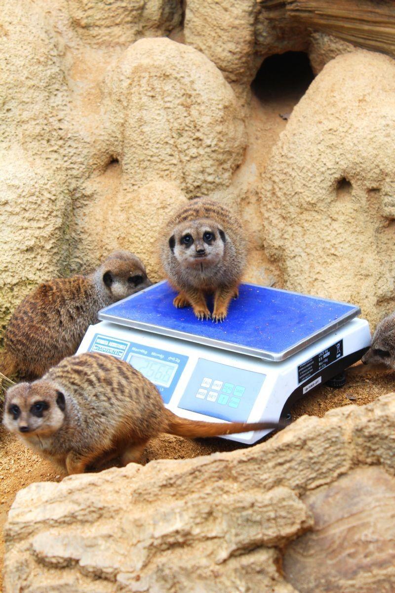 Controlli e misurazioni al bioparco