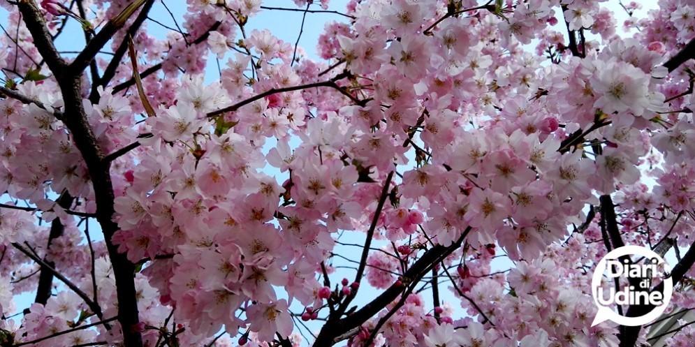 Arriva l'Equinozio: benvenuta Primavera!