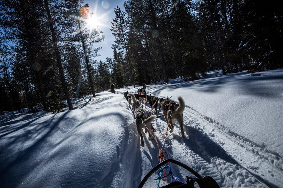 Gita con gli huski in mezzo alla foresta