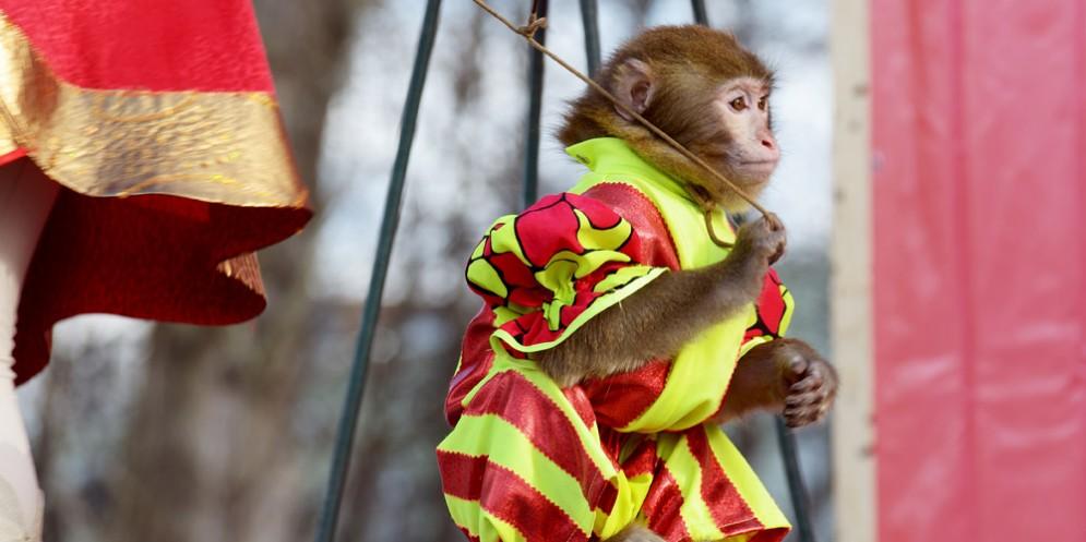 No agli animali nei circhi senza requisiti internazionali: proposta di legge