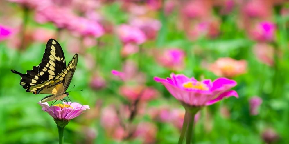 'Banditi in Natura'con la Casa delle Farfalle