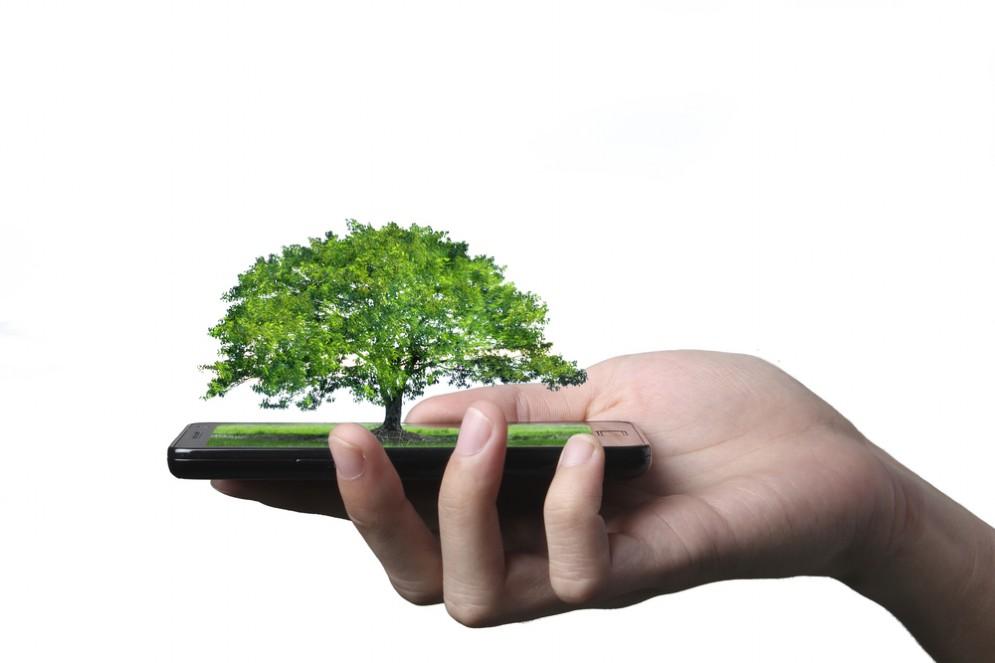 Il wi-fi uccide le piante
