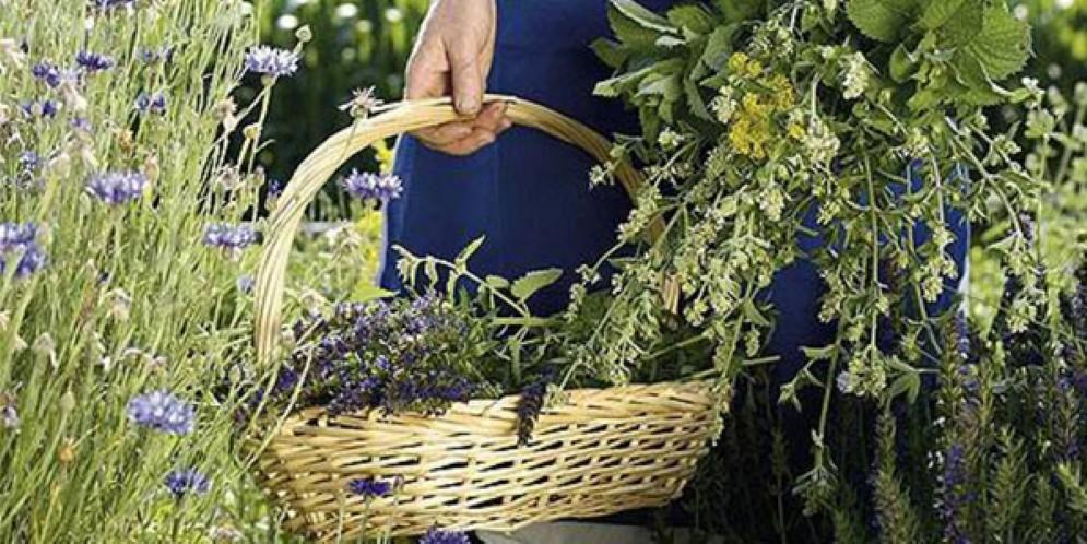 Festa delle erbe e del benessere a Tramonti di Sopra