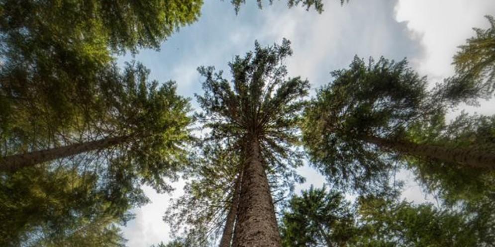 Comincia Risonanze, il Festival tra gli alberi 'che suonano'