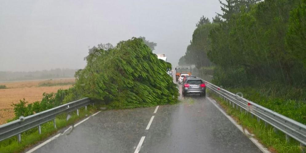 Maltempo: caduto un albero sulla statale, a Manzano. Segnalati i primi allagamenti